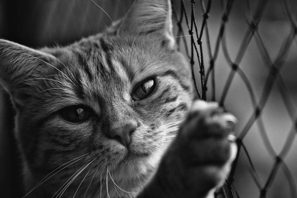 cat-1790093_1920