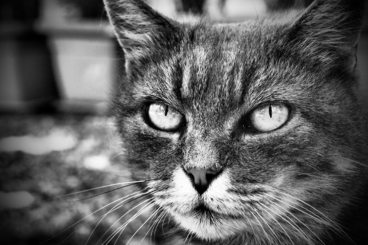 cat-3611754_1920