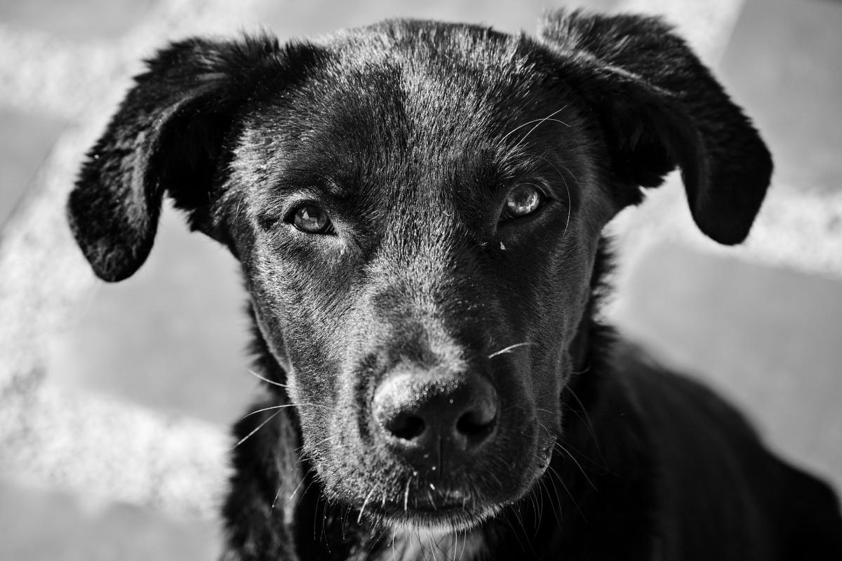 dog-2901205_1920
