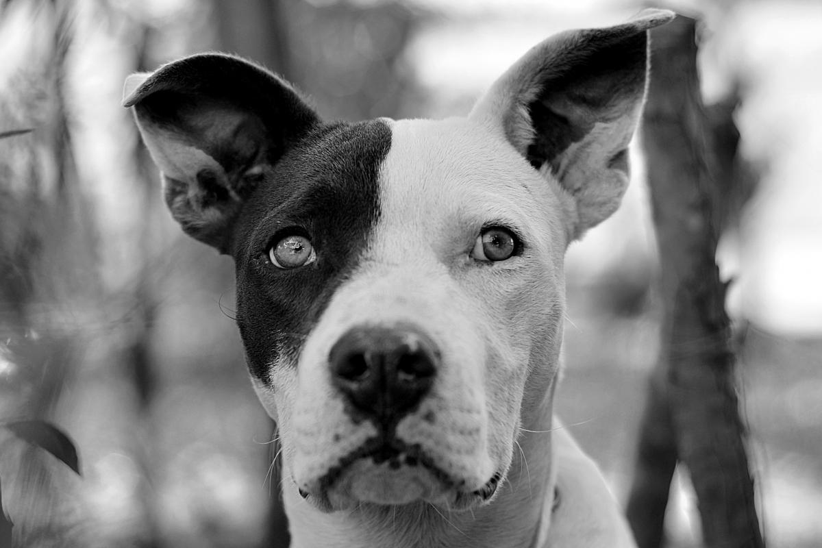 dog-3545402_1920